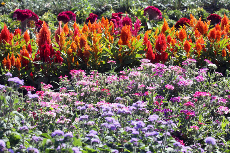 Flower bed with annuals in the summer sun stock images