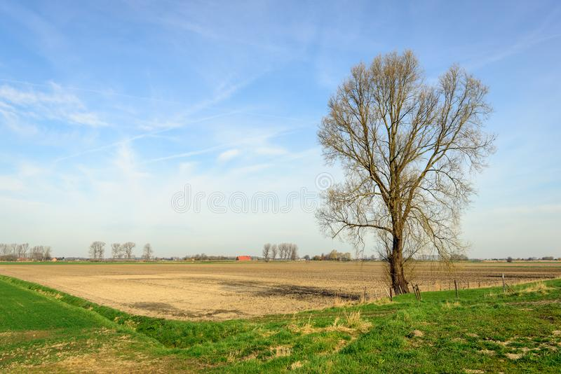 High bare tree on the edge of a plowed field stock image