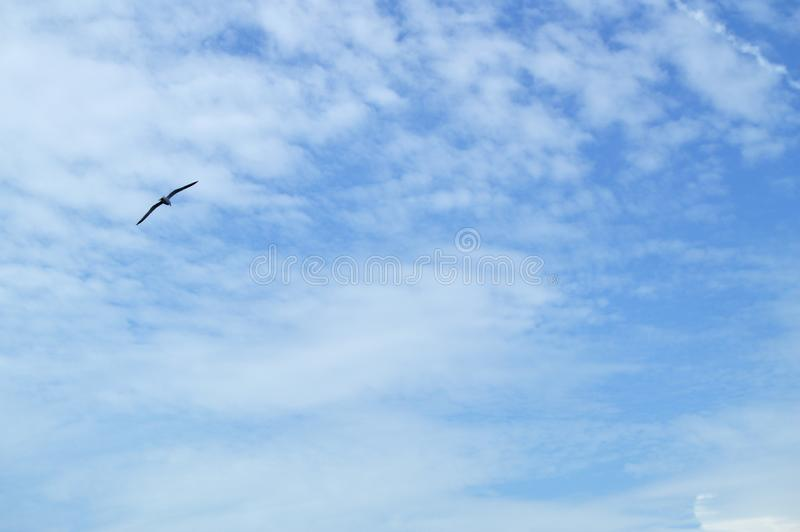 High in the blue sky flying bird Albatross, spreading two wings over the sea. Flight, wavy, nature, wildlife, animal, ocean, seabird, south, tourism, travel royalty free stock photos