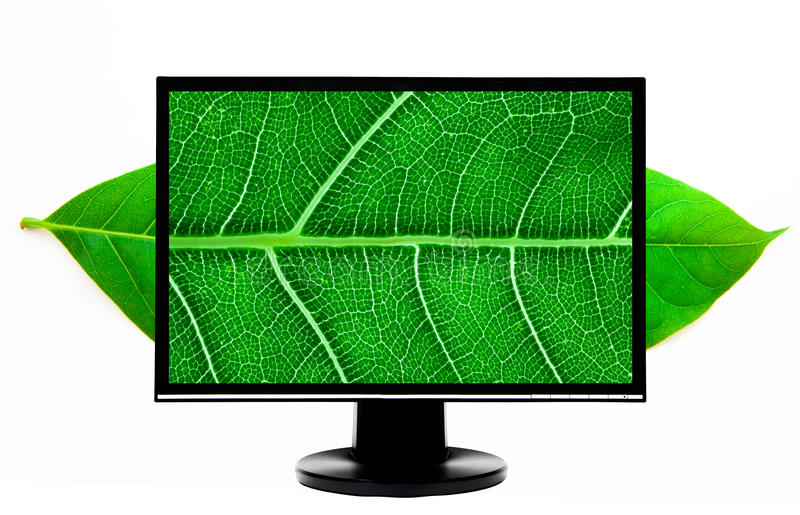 High Definition computer monitor. High Definition lcd computer monitor and green leaf royalty free stock image