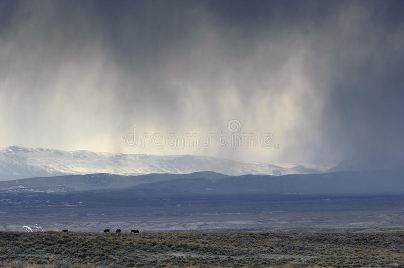 High desert storm. Storm over the high desert, with mustangs, Sand Wash Basin, Colorado, USA royalty free stock image