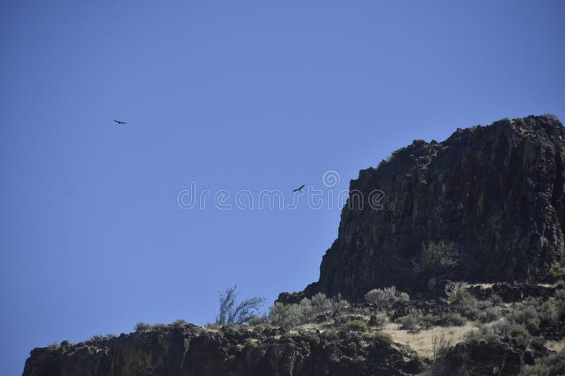 A high desert summer view of a rocky outcrop circled by buzzards. Sagebrush, eastern, washington, state, bird, vulture royalty free stock photography