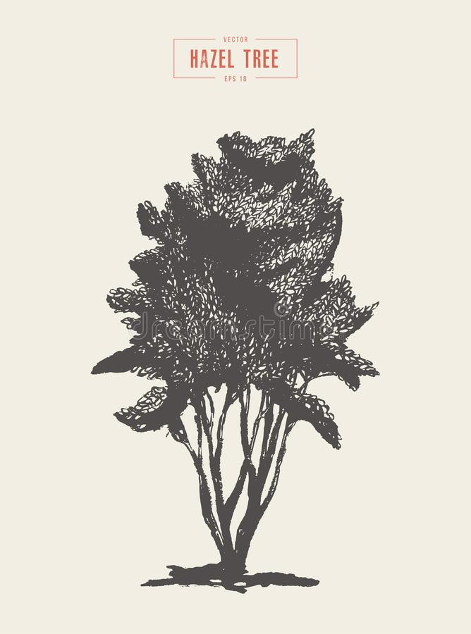 High detail vintage hazel tree, hand drawn, vector vector illustration