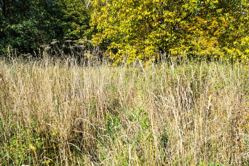 High dried grass on meadow in urban park. In sunny autumn day stock image
