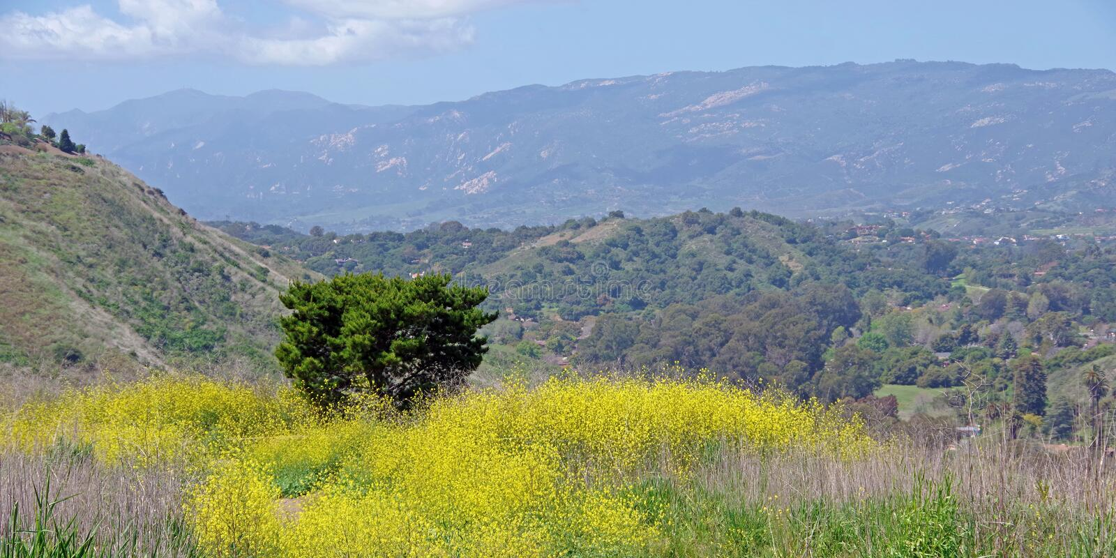 Mustard field in a high elevation park stock photography