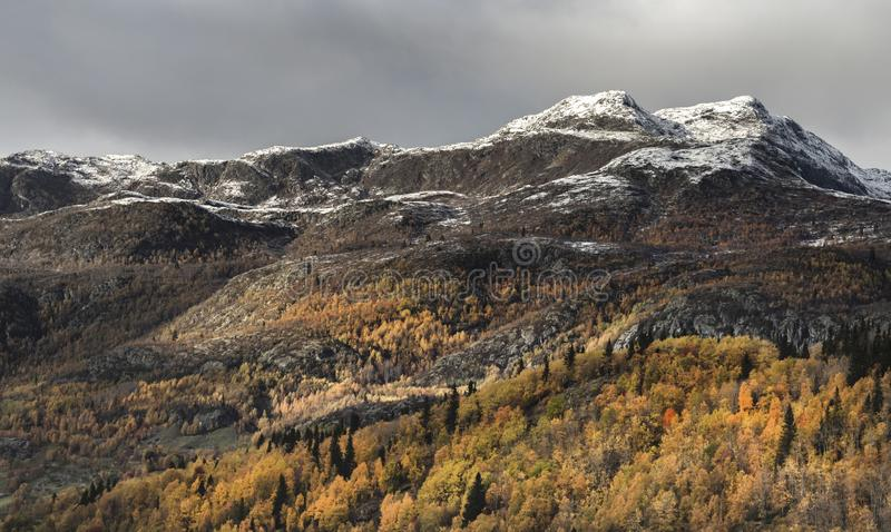 The Mountains. High elevations on mountains produce colder climates than at sea level. These colder climates strongly affect the ecosystems of mountains stock images
