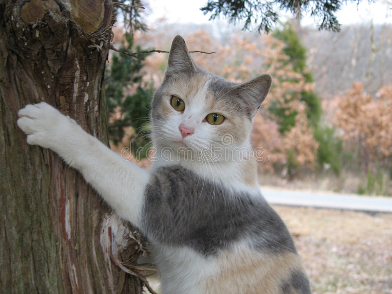 High Feline royalty free stock photos