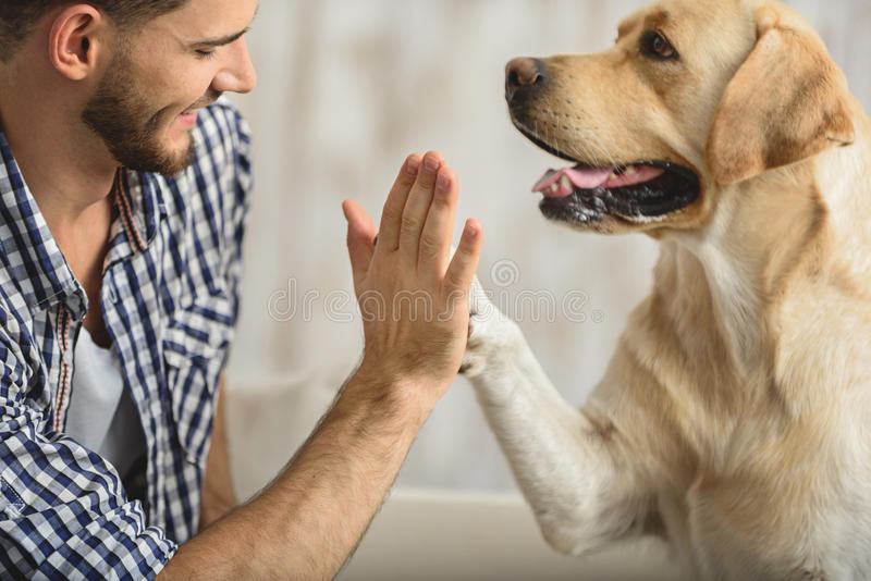 High five with dog and human stock photo