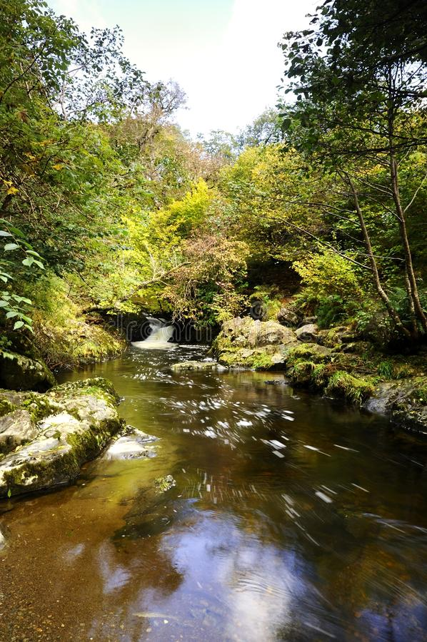 Download High Force Beck stock photo. Image of river, moss, tree - 27285376