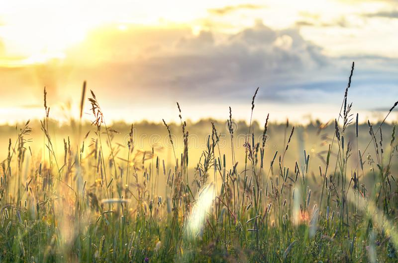 High Grass Glowing in Sunbeams on a Summer Morning with Cloudy Sky and Trees down The Hill. Inspiring, Positive Attitude, New Day. Concept stock photography