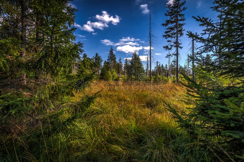 High grass in green autumn forest near stone labyrinth Bledne skaly stock images