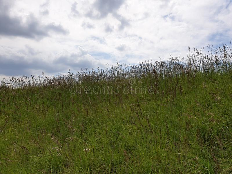 High grass. In the wind with clouds royalty free stock images