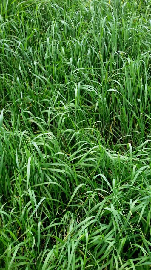High grass stock photo