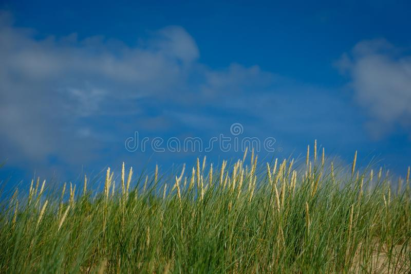 High green grass on sky background. Summer season. copy space stock images