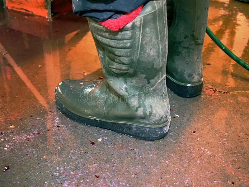 High gummy boots in fish slaughter house. Red bloody floor bellow filleting board. Traditional manual work stock photo
