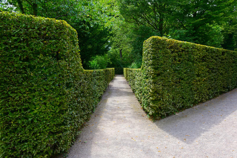 High hedges in the park. High hedges in the city park in Germany stock images