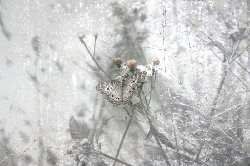 High Key Butterfly stock photo