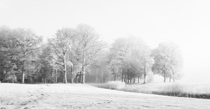 High Key countryside landscape. High key landscape, countryside, trees and stream in meadow royalty free stock photo
