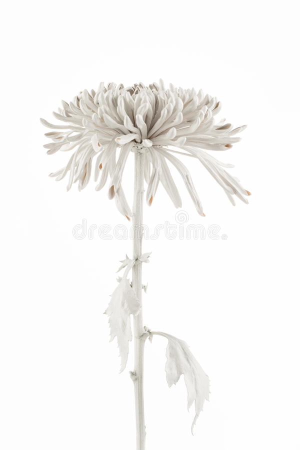 High key photo of white painted flower royalty free stock photography