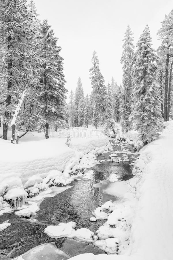 High-key winter landscape with fir trees and a stream. In the foothills of Switzerland royalty free stock photography