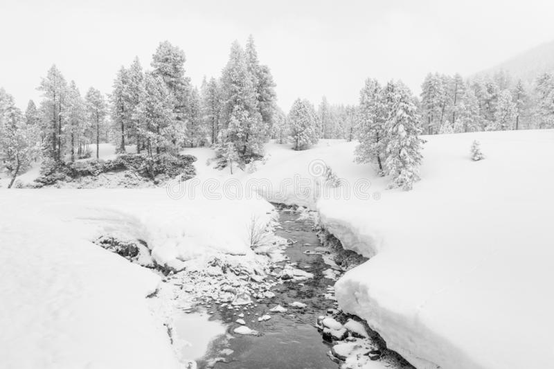 High-key winter landscape with fir trees and a stream. In the foothills of Switzerland stock photos