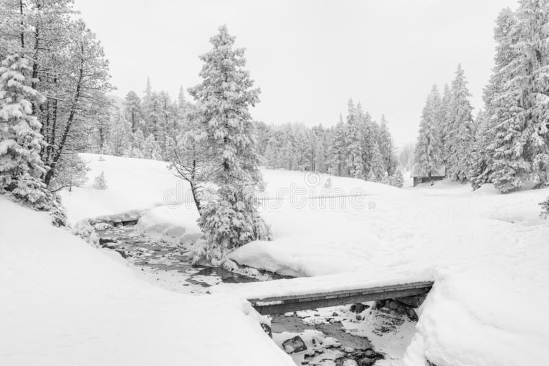 High-key winter landscape with fir trees and a stream. In the foothills of Switzerland royalty free stock image