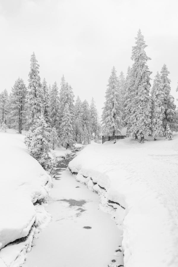 High-key winter landscape with fir trees and a stream. In the foothills of Switzerland stock image