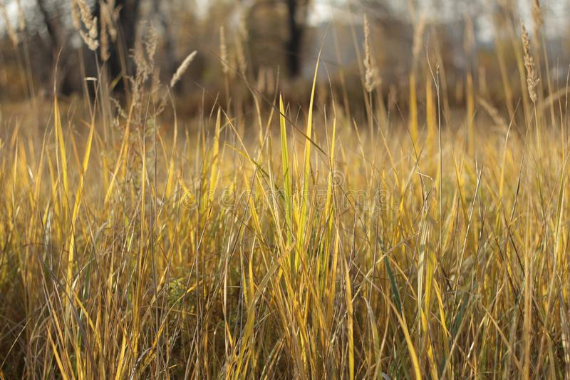 Meadow grass in the summer royalty free stock images