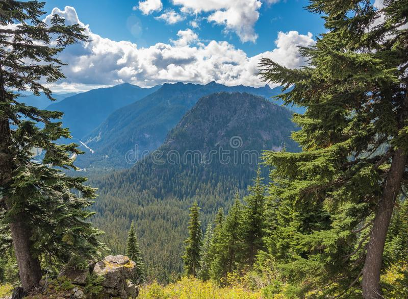 High mountain covered with trees. High mountain, covered with forest, between 2 trees stock photos