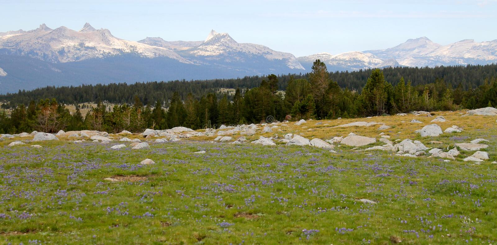 High mountain Meadow. With wildflowers royalty free stock photo