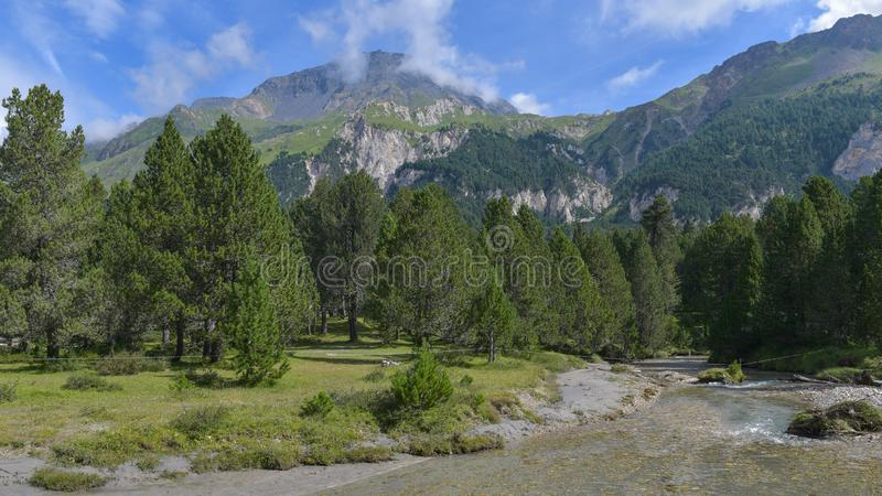 High mountain overview, with stone pine and flowing river. In summer royalty free stock photography