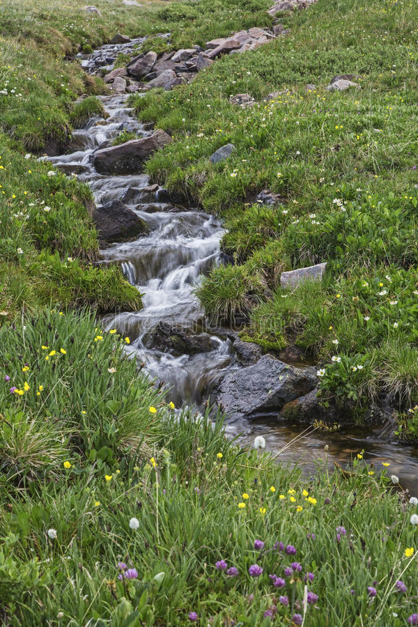 High mountain snowmelt creek. The snow melt begins in June in the high alpine tundra wildflower mountain meadows above timberline. The grassy hillside is alive royalty free stock image