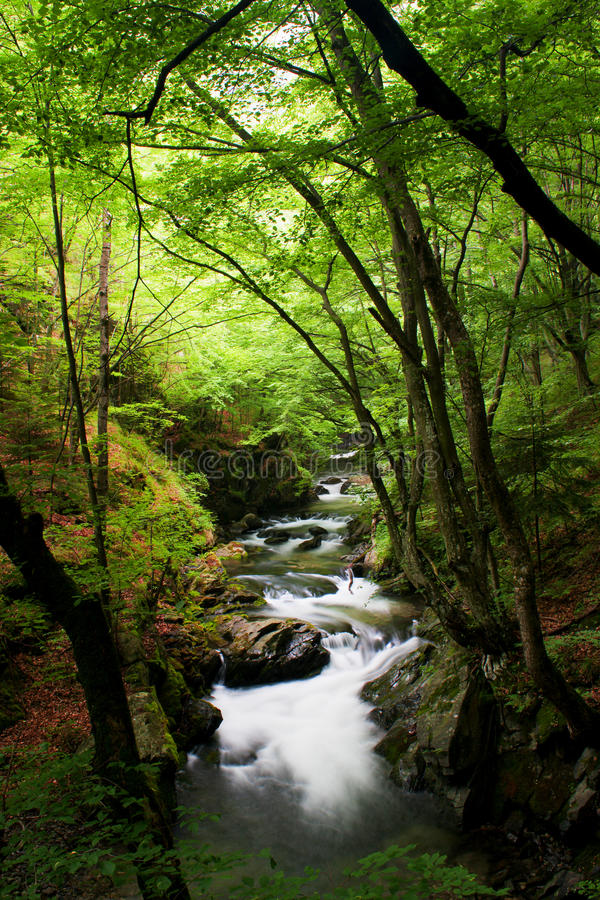 High mountain stream in forest stock photos