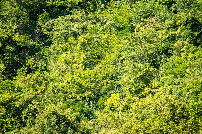 High mountains, beautiful blue skies, green trees created by nature. In Thailand royalty free stock photo
