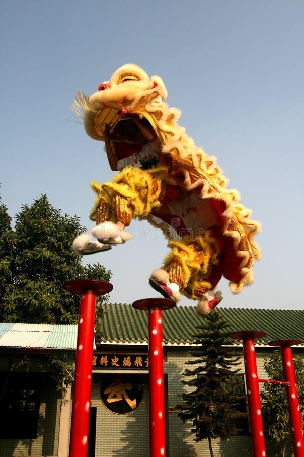 Free High Pile Lion Royalty Free Stock Photo - 16908315