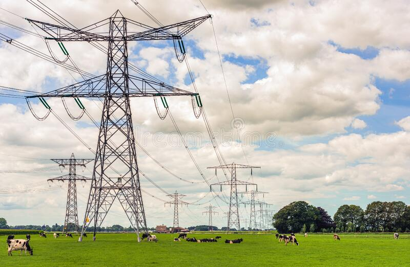 High power pylons contrasting with small cows in a Dutch landscape royalty free stock photography