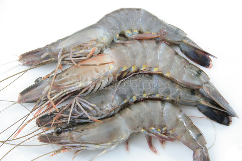 Download High Quality Fresh Prawns Royalty Free Stock Image - Image: 7225366