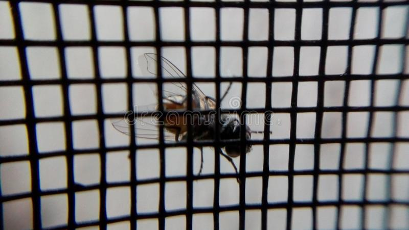 A fly on the window stock photography