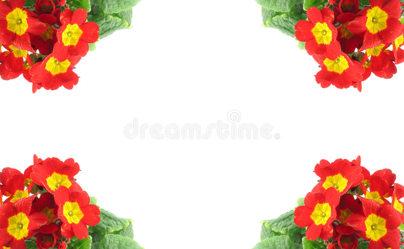 High resolution frame decorated with beautiful vivid flowers stock image