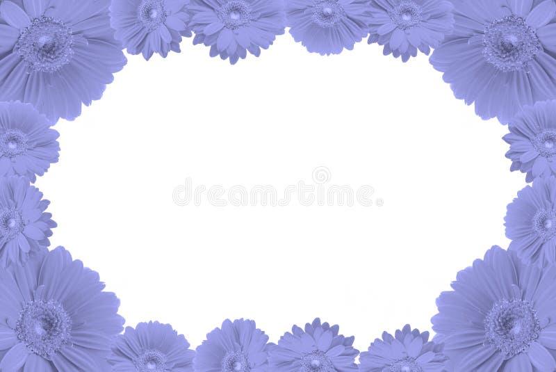 High Resolution Gerbera Frame Stock Images