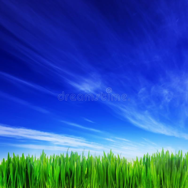 High resolution image of fresh green grass and blue sky. Landscape. Perfect as background, backdrop, design element. Square composition good to crop if needed royalty free stock image
