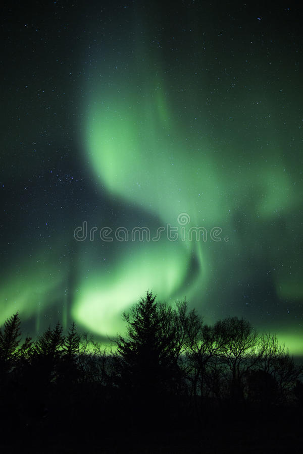 Northern lights above trees in Iceland stock photography