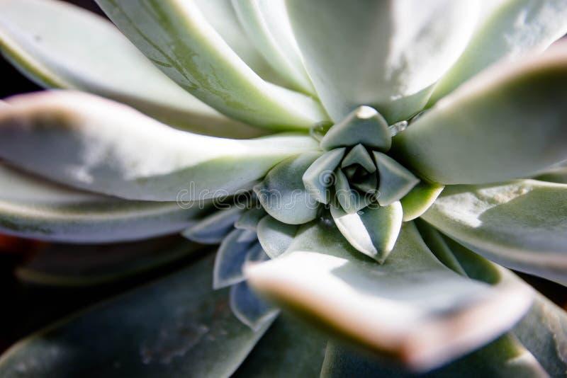 Desert Succulents of the Kalahari royalty free stock images