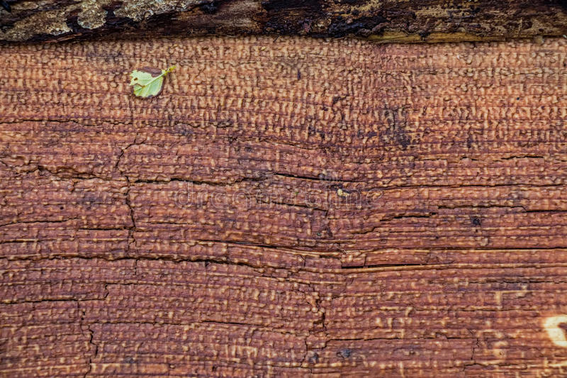 High resolution old wooden texture. High resolution old obsolete rustic timber surface stock photo