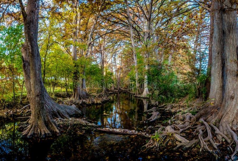 High Resolution Panorama of Fall Foliage at Cibolo Creek, Texas. royalty free stock photos