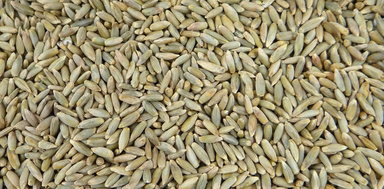 Top view of Rye grains. Healthy superfood. High resolution picture of Rye grains. Healthy superfoods stock photography