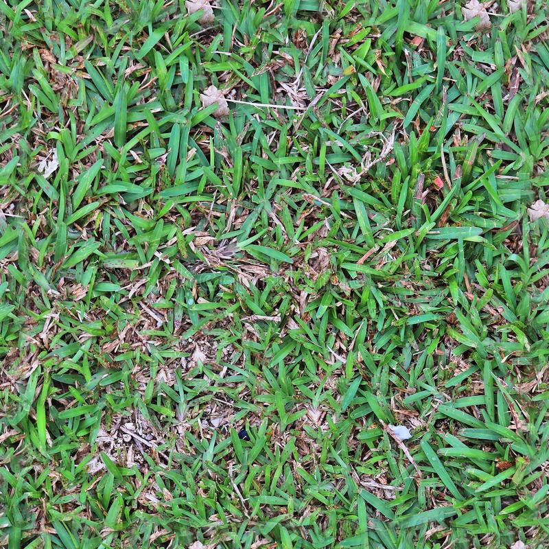 High resolution seemless texture of green grass and plants for 3d modelling with more than 6 megapixel in size stock photo