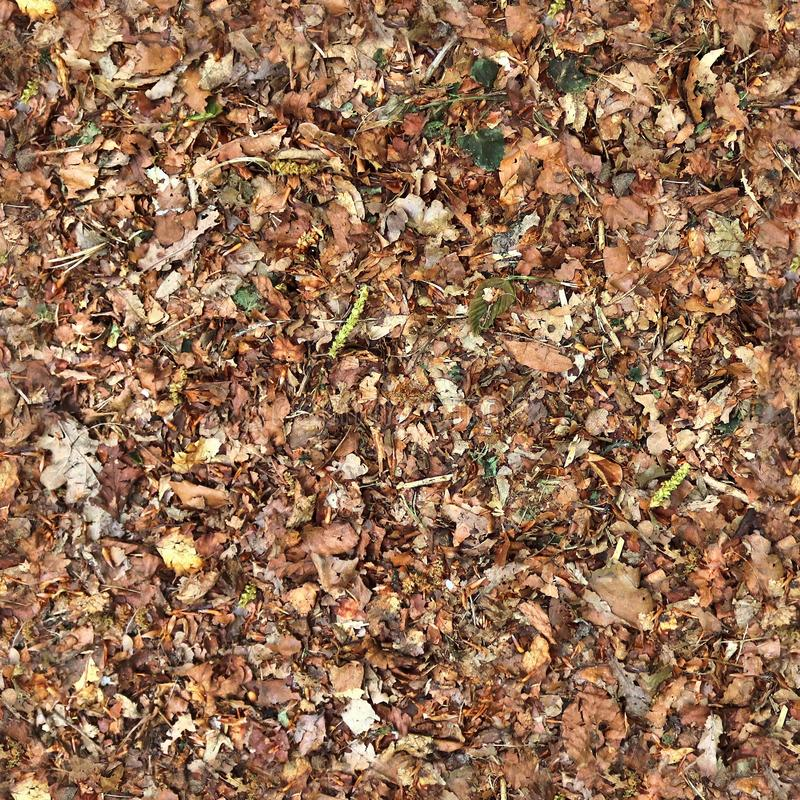 Free High Resolution Seemless Texture Of Forest Ground With Autumn Leaves For 3d Modelling With More Than 6 Megapixel In Size Stock Image - 151104021