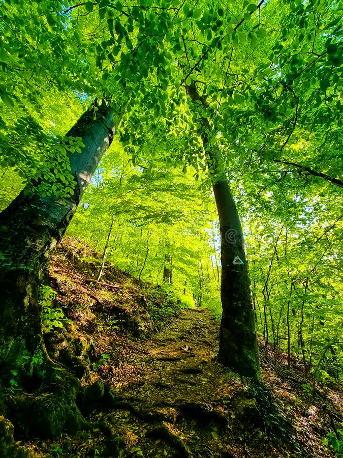 336 646 Forest Wallpaper Photos Free Royalty Free Stock Photos From Dreamstime