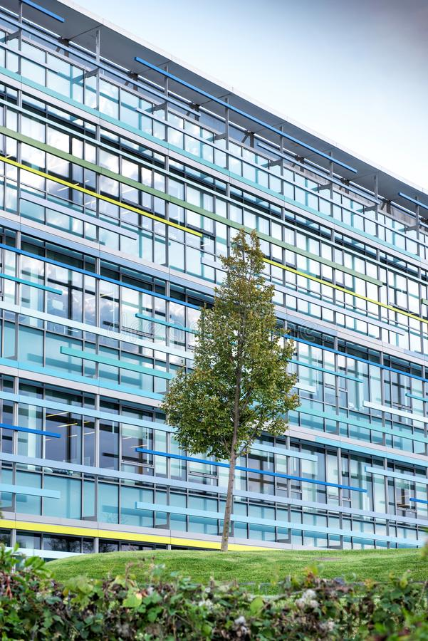High rise modern office building. With blue windows, tree in foreground royalty free stock image